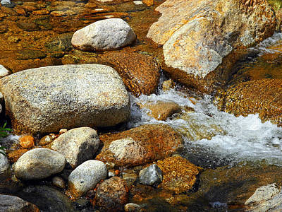Life Of The Riverbed Print by Lynda Lehmann