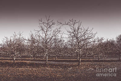 Lifeless Cold Winter Orchard Trees Print by Jorgo Photography - Wall Art Gallery