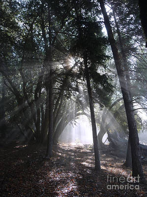 Tree Spirit Photograph - Light Cathedral by JoAnn SkyWatcher
