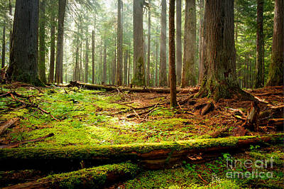 Forest Floor Photograph - Light In The Forest by Idaho Scenic Images Linda Lantzy