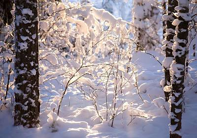 Sunset In Norway Photograph - Light Of Winter by Rose-Maries Pictures