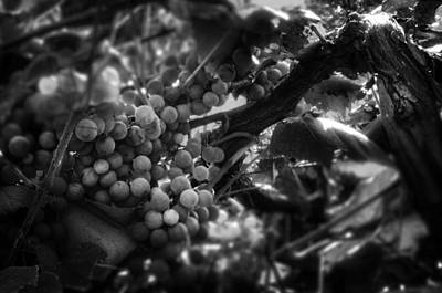 Light On The Fruit In Black And White Print by Greg Mimbs