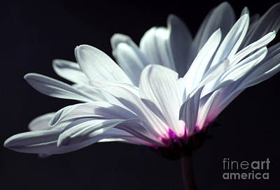 White Flower Photograph - Light The Way by Krissy Katsimbras