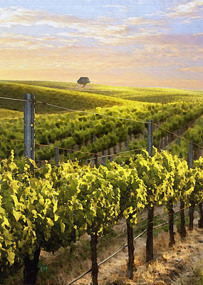 Lighted Vineyard Print by Sharon Foster