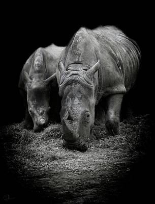 Rhino Photograph - Like Father Like Son by Paul Neville