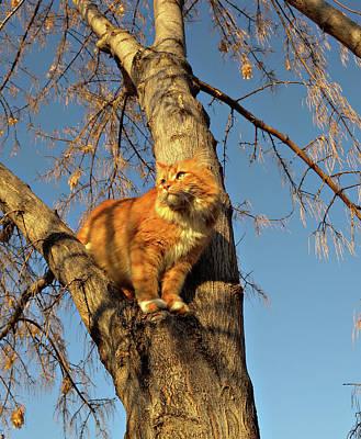 Tabby Cat Photograph - Like The Big Boys by ShaddowCat Arts - Sherry