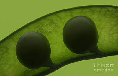 Like Two Peas In A Pod Print by Janeen Wassink Searles