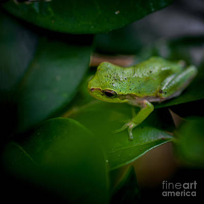 Spring Peepers Photograph - Lil Peeper by DeWayne Beard