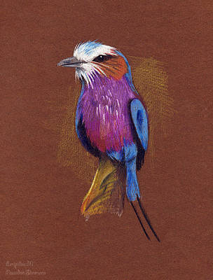 Lilac Drawing - Lilac-breasted Roller Illustration by Maria Evripidou