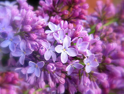 Soft Digital Art - Lilac by Jessica Jenney