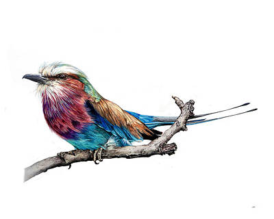 Lilac Drawing - Lilac Roller by Jeannette Sirois
