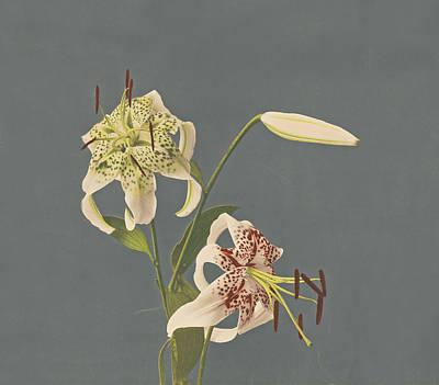 Flower Photograph - Lilies by Kazumasa Ogawa