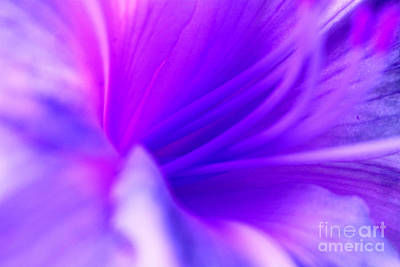 Daylily Photograph - Lily Charm by Krissy Katsimbras