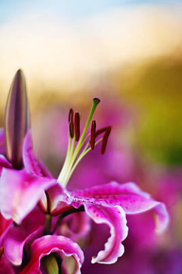 Lillies Photograph - Lily Impression by Mike Reid