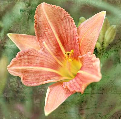 Lily In A Haze Print by Cathie Tyler