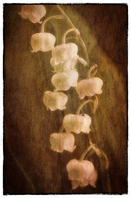 Painterly Photograph - Lily Of The Valley by Robert Brown