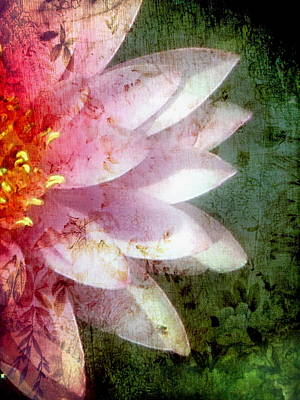 Photograph - Lily Pad Art  by Andrea Kollo