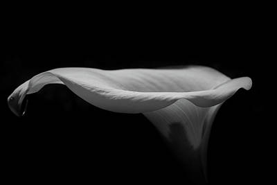 Lilies Photograph - Lily2 by Iain Fielding