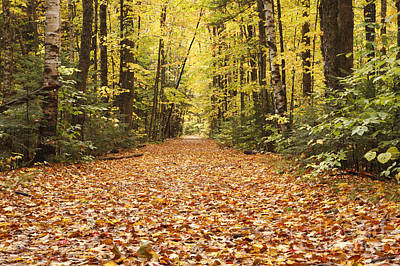 Lincoln Woods Trail  - White Mountains New Hampshire Print by Erin Paul Donovan