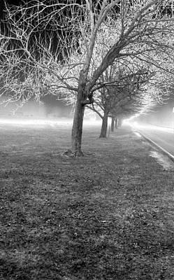 Black Top Digital Art - Line Of Trees 1 by Linnea Tober