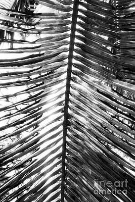 Toro Photograph - Lines by John Rizzuto