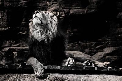Lion Rock Print by Martin Newman