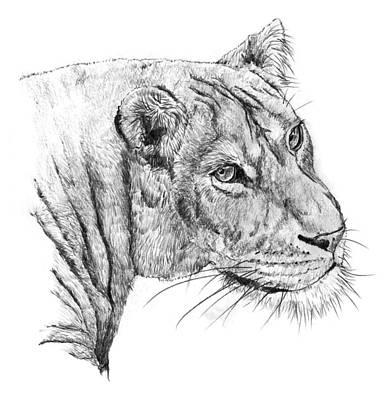 Animals Painting - Lion by Shusaku Sato