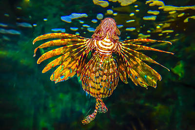 Surreal Photograph - Lionfish Ballerina by Andy Frasheski