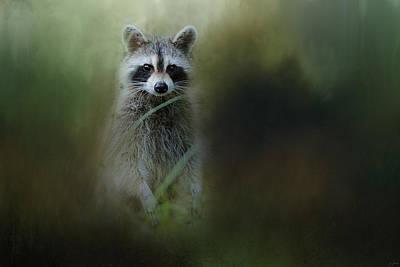 Raccoon Photograph - Little Bandit by Jai Johnson