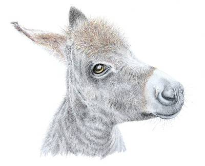 Donkey Drawing - Little Donket II by Sandra Moore