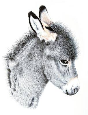Donkey Drawing - Little Donkey by Sandra Moore