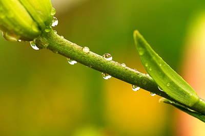 Little Drops Of Rain Print by Amanda Kiplinger