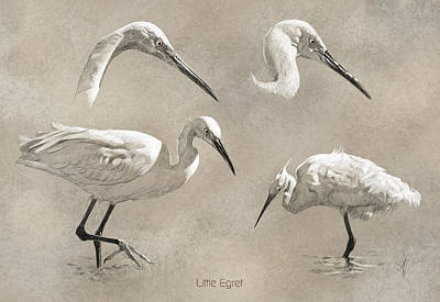 Egret Drawing - Little Egret by Arie Van der Wijst