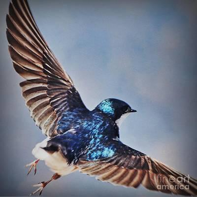 Swallow Photograph - Little Feet by Mingtaphotography