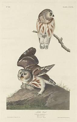 Owl Drawing - Little Owl by John James Audubon