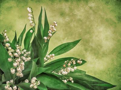 White Flower Photograph - Little Poison by Wim Lanclus