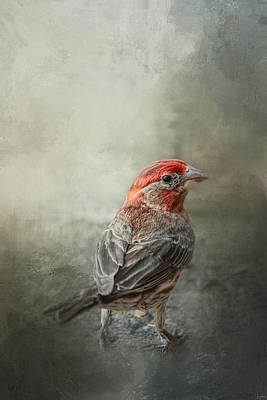 House Finch Photograph - Little Red After The Storm by Jai Johnson