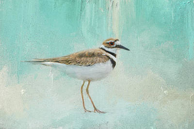 Killdeer Photograph - Little Seaside Friend by Jai Johnson