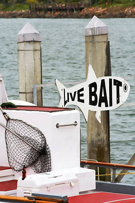 Marina Del Rey Photograph - Live Bait by Art Block Collections