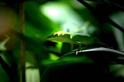 Photograph - Lizard Portrait 3 by David Weeks