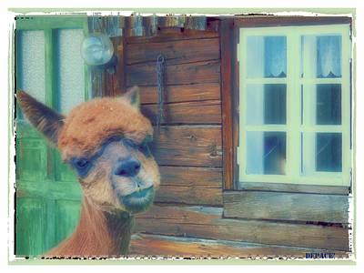 Llama Digital Art - Visiting Llama  by KJ DePace