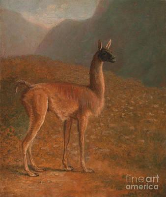 Llamas Painting - Llama by Celestial Images