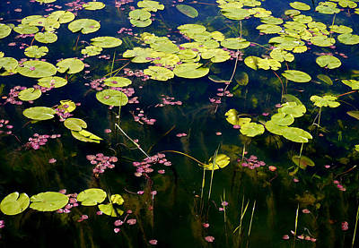 Lilies Photograph - Llangors Lilies by Susan Fernandez