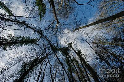 Loamhole Dingle Treetops Print by Rawshutterbug
