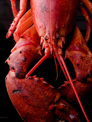 Light Lunch Photograph - Lobster by Jim DeLillo