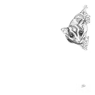 Marsupial Drawing - Loki A Sugar Glider by Stacey May