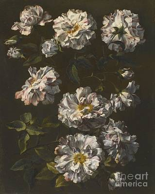 London A Study Of Striped White Gallica Roses Print by  Jean Baptiste