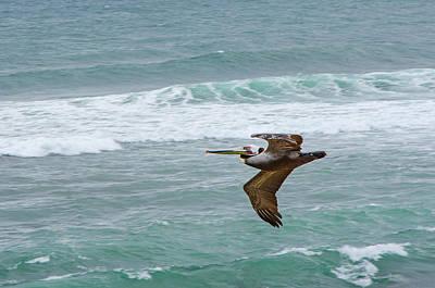 Lone Pelican Photograph - Lone Pelican by Susan  McMenamin
