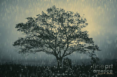 Lone Tree And Stormy Evening Print by David Gordon