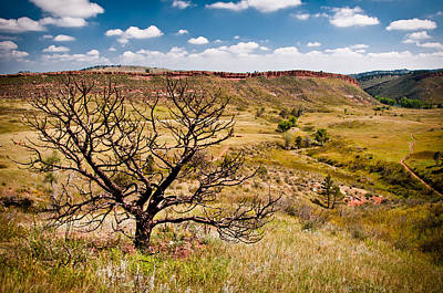 Lone Tree, Colorado Print by Preston Broadfoot